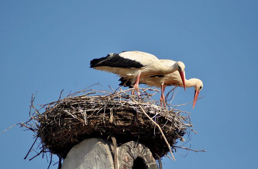 Ausflugsziel Burgenland Rust Storch